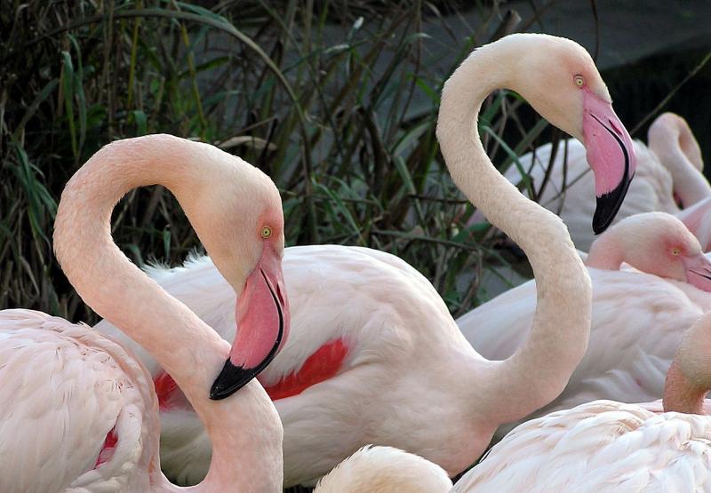 Zoa Parc Animalier Et Exotique Park Sanary Sur Mer
