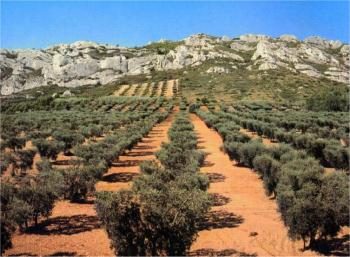 circuit-the-wine-trail-aoc-coasts-of-ventoux