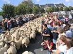 the-transhumance-of-the-sheep