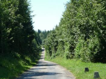 the-route-des-sapins-road