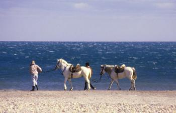 the-beauty-of-camargue