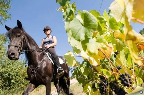 equestrian-excursions-in-poncin