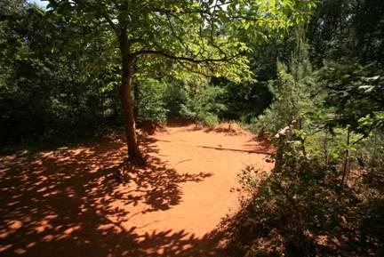discover-the-flora-of-roussillon