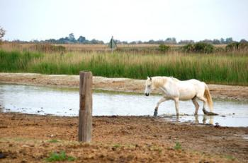 visit-of-a-manade-in-the-heart-of-the-camargue-park