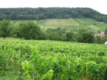 the-vineyard-of-toul