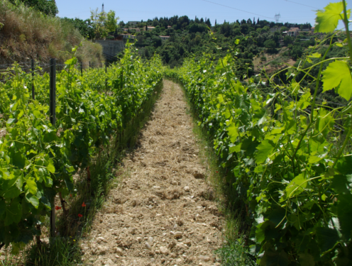 audio-guided-tour-of-aoc-bandol